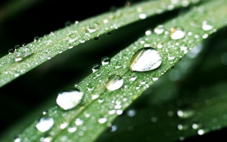 Dark green drops wallpapers and stock photos