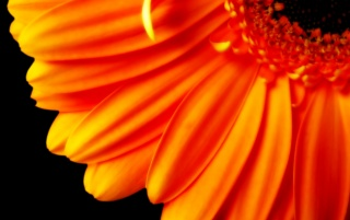 Orange flower petals wallpapers and stock photos