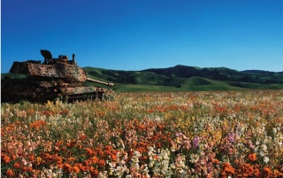 Tank in the field wallpapers and stock photos