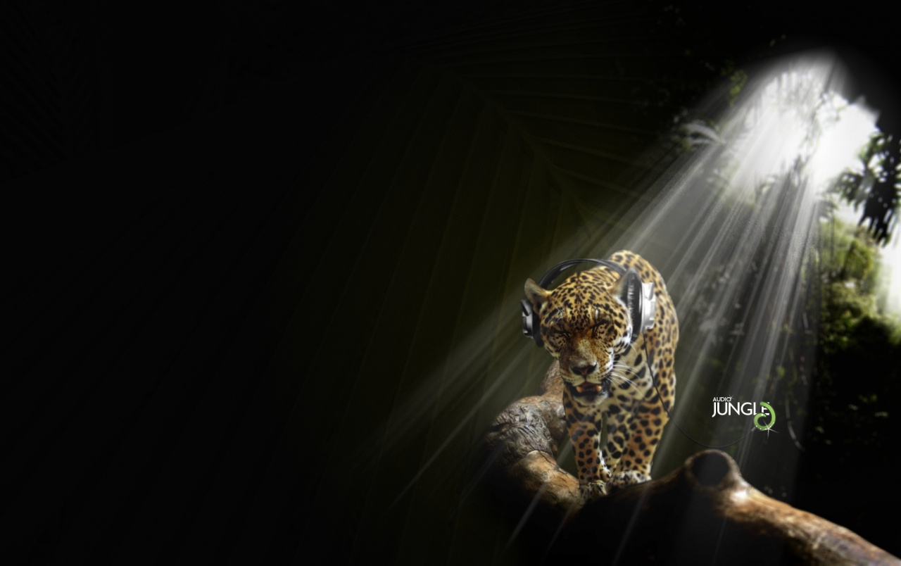 Leopard and music wallpapers
