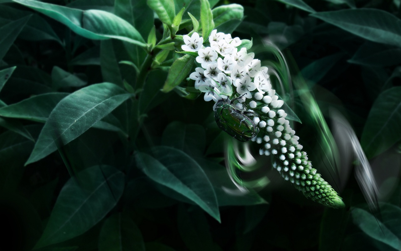 Green insect wallpapers