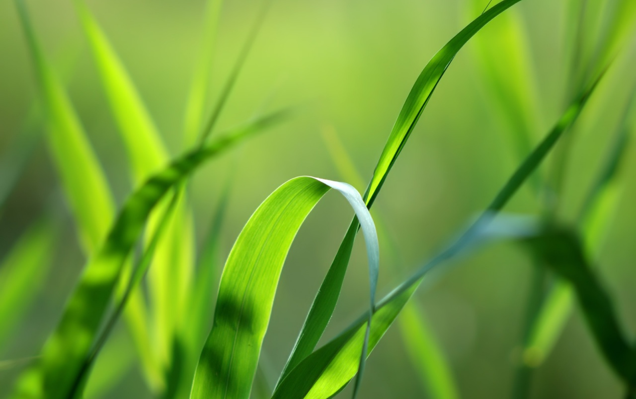Green grass straws wallpapers