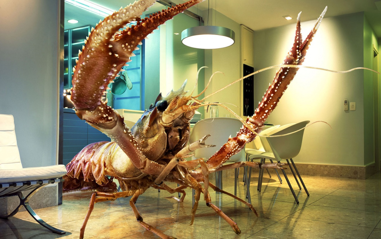 Coconut Crab Wallpapers HD VKBGN