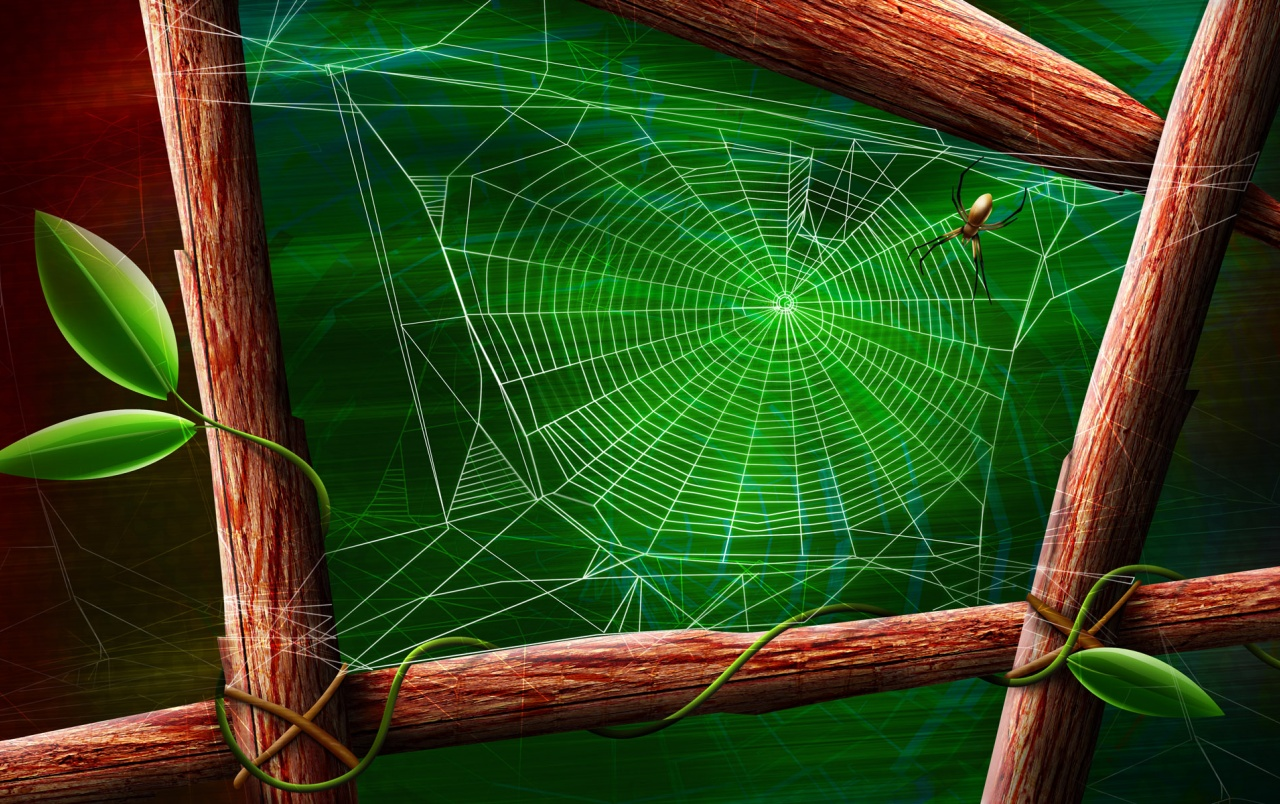 Spider and the web wallpapers