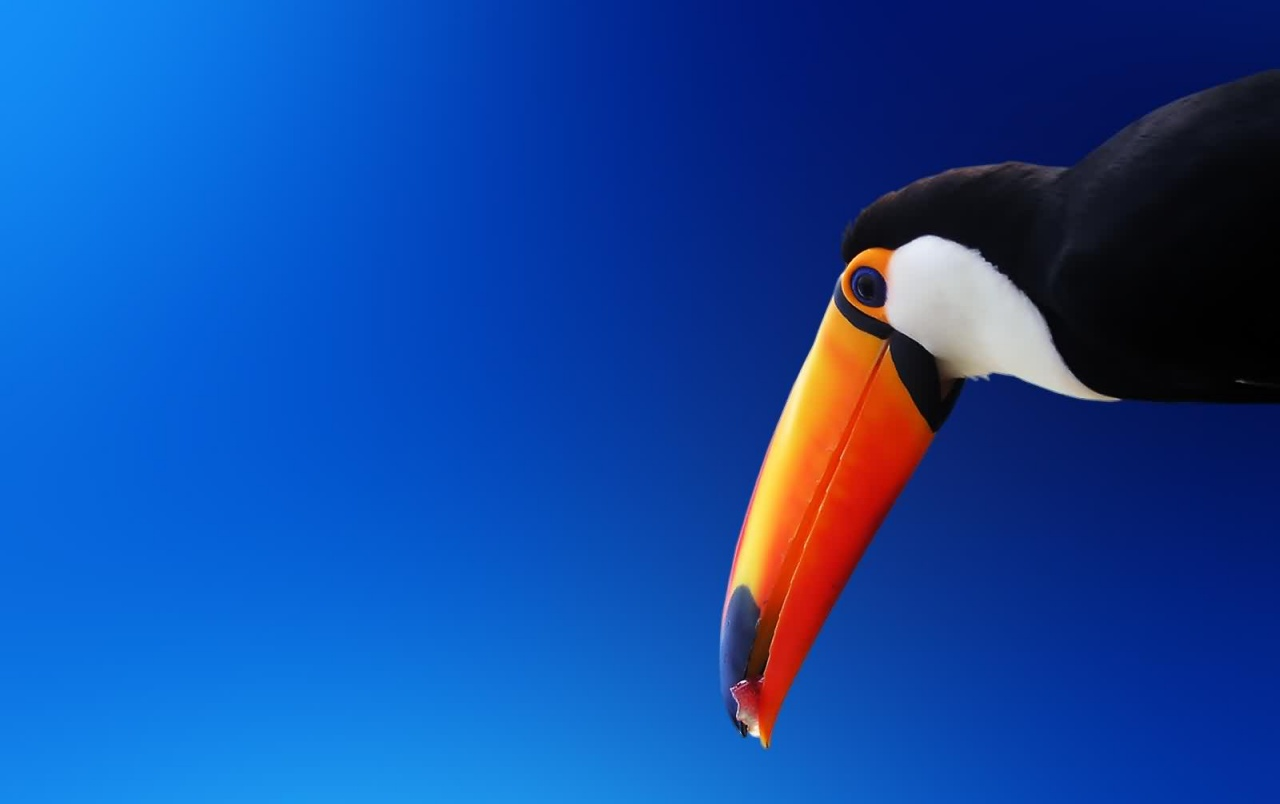 High contrast bird wallpapers