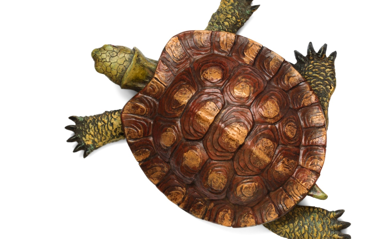 Turtle top view wallpapers