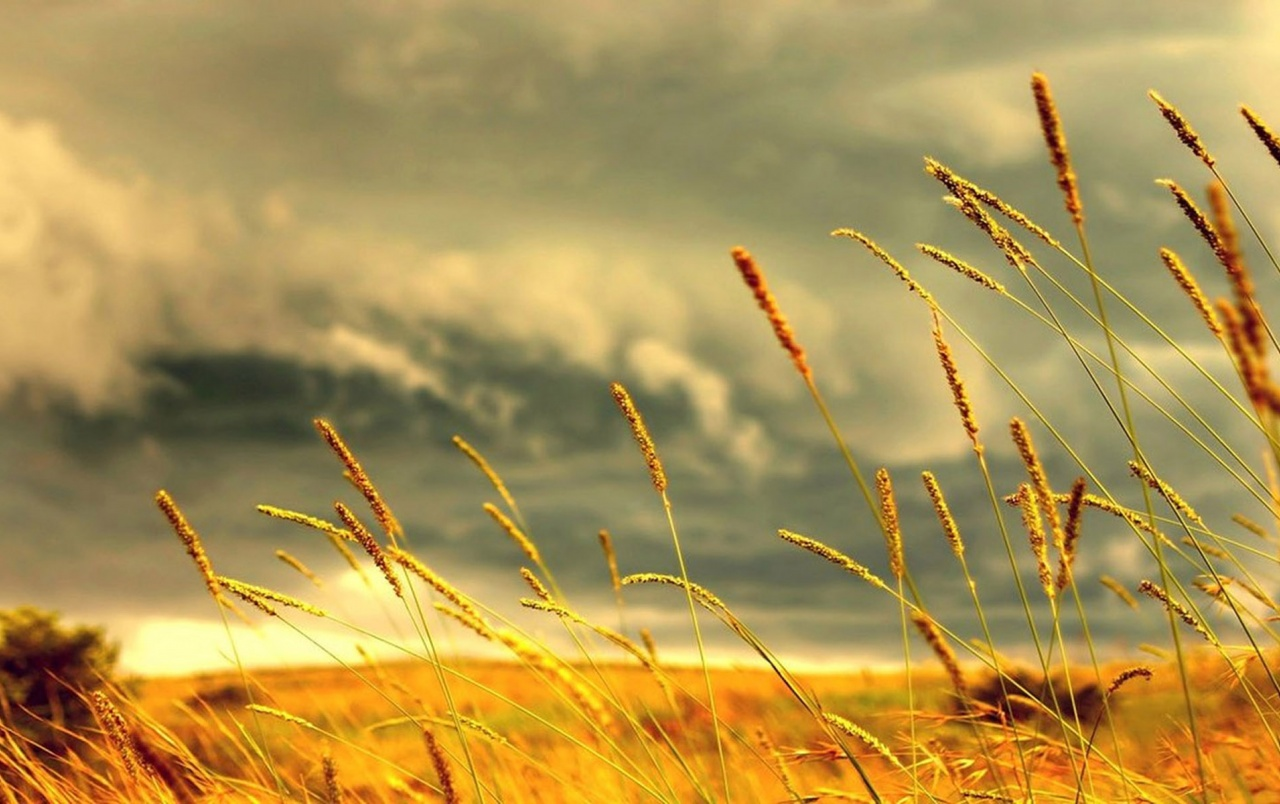 Hayfield im Sommer wallpapers