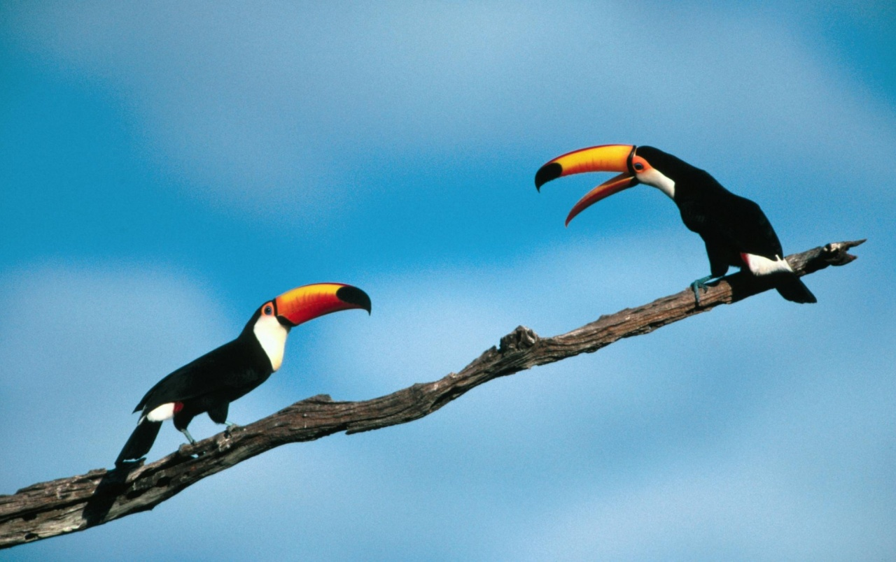 Two Parrots Wallpapers And Stock Photos
