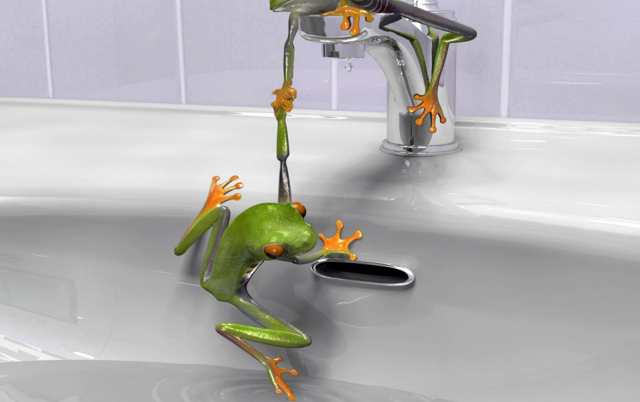 Frogs in the sink wallpapers