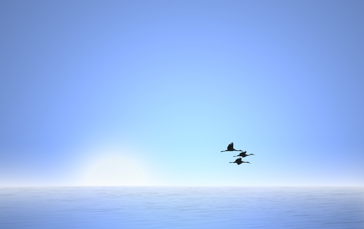 Flight in the sky wallpapers
