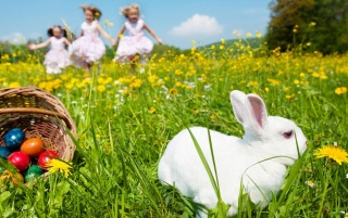 White easter rabbit wallpapers