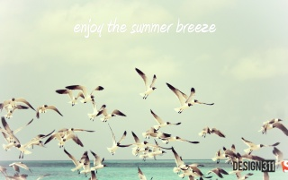 Summer Breeze wallpapers