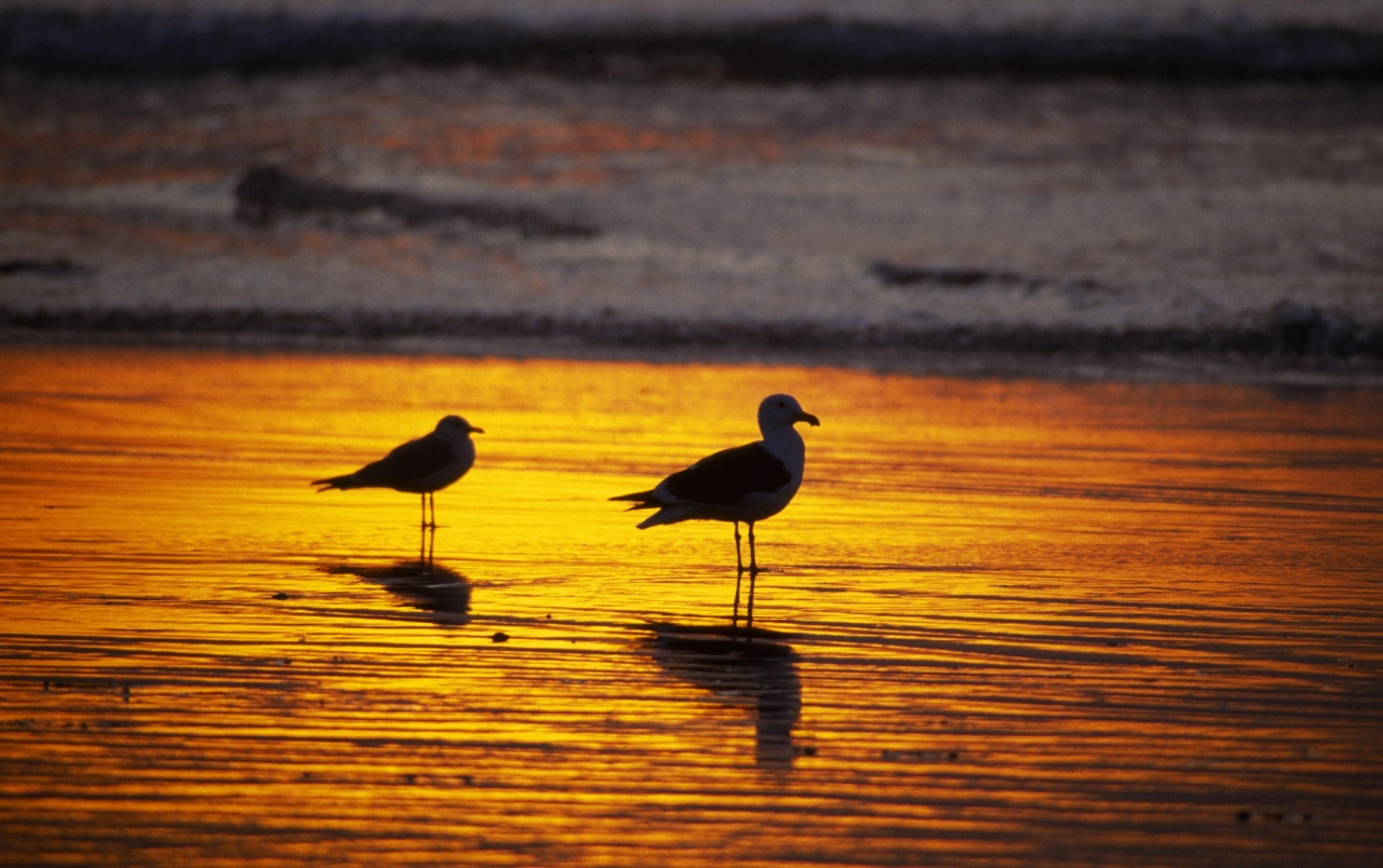 Seagulls at dawn wallpapers