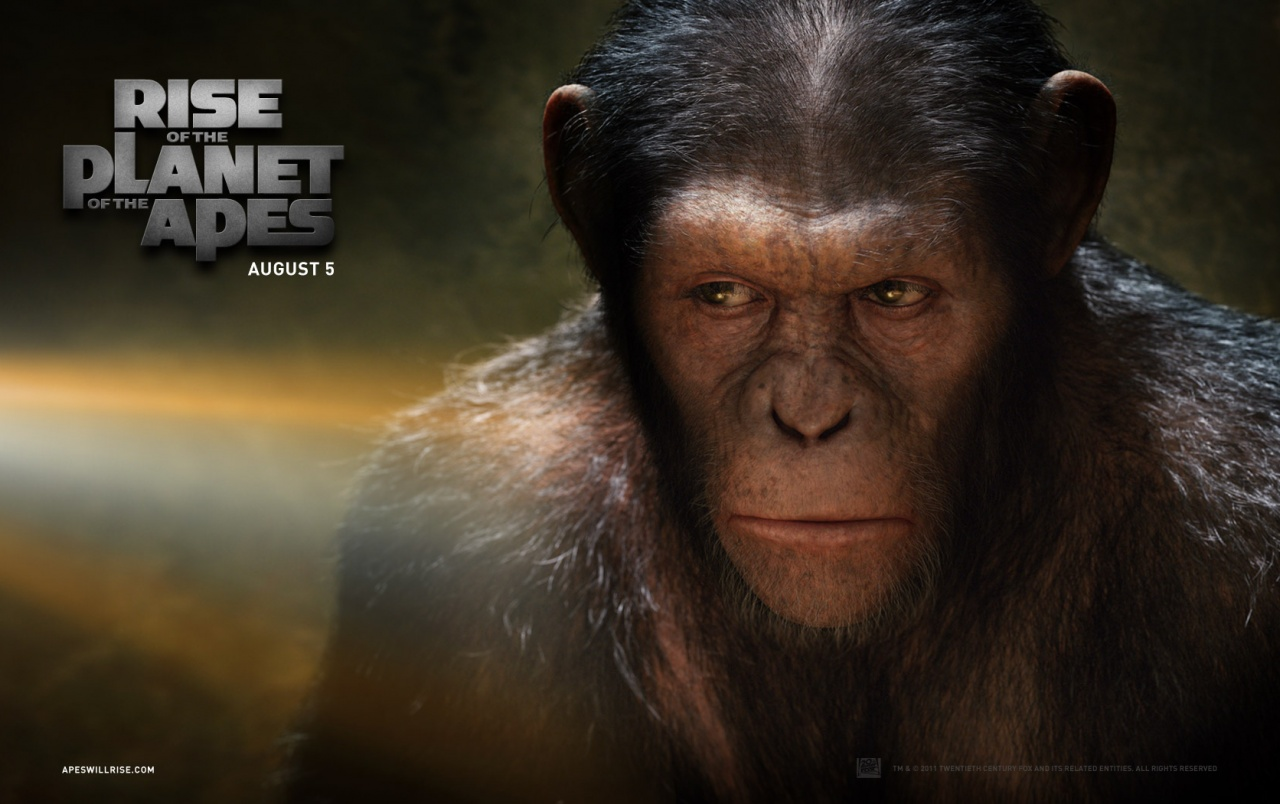 Rise of the planet of the apes caesar wallpapers rise - Caesar hd wallpaper ...