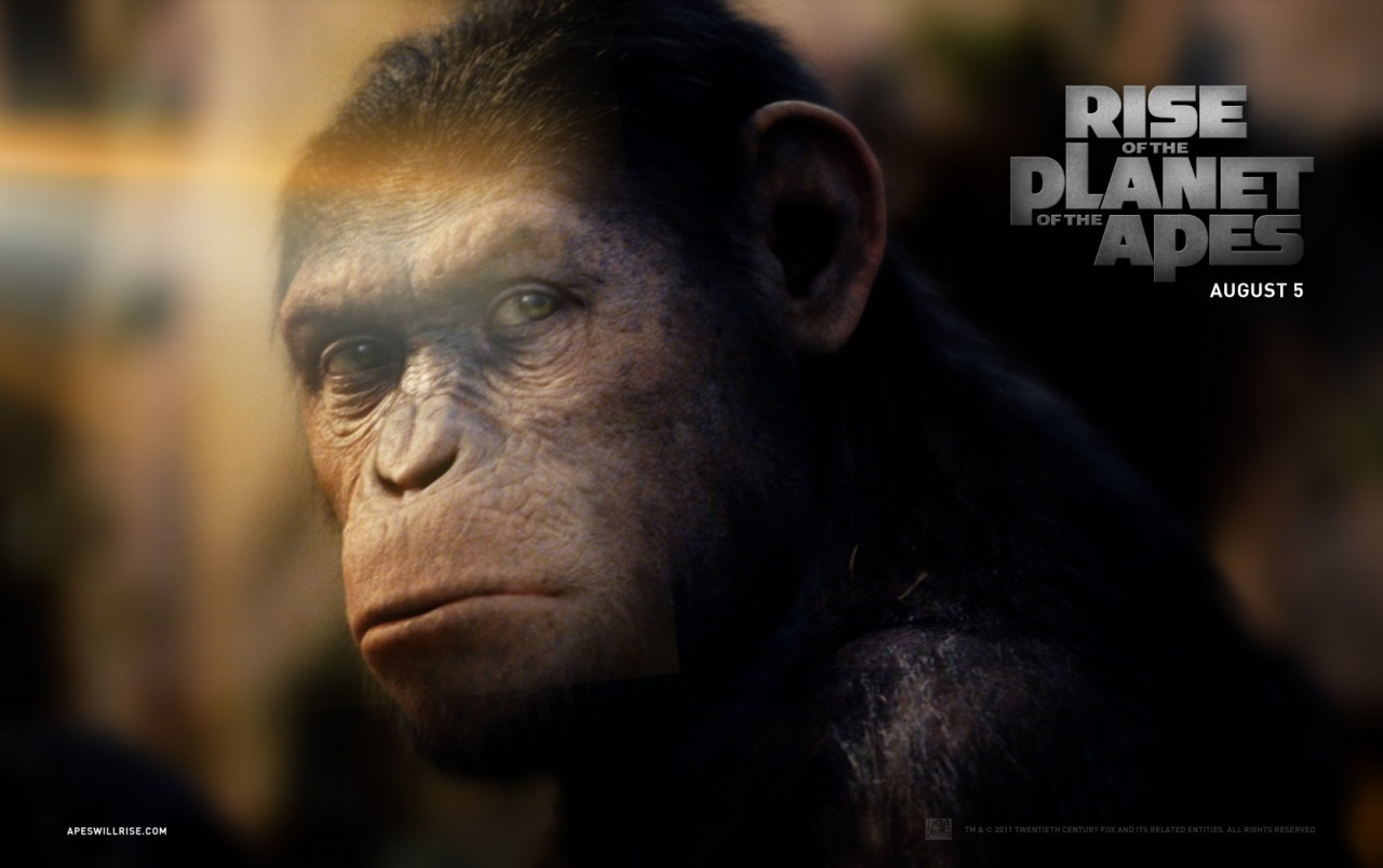 Rise Of The Planet Of The Apes Caesar Wallpapers Rise Of The
