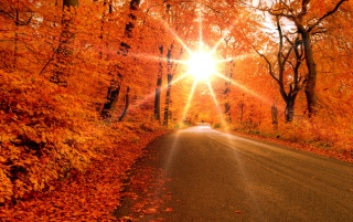 Autumn road wallpapers