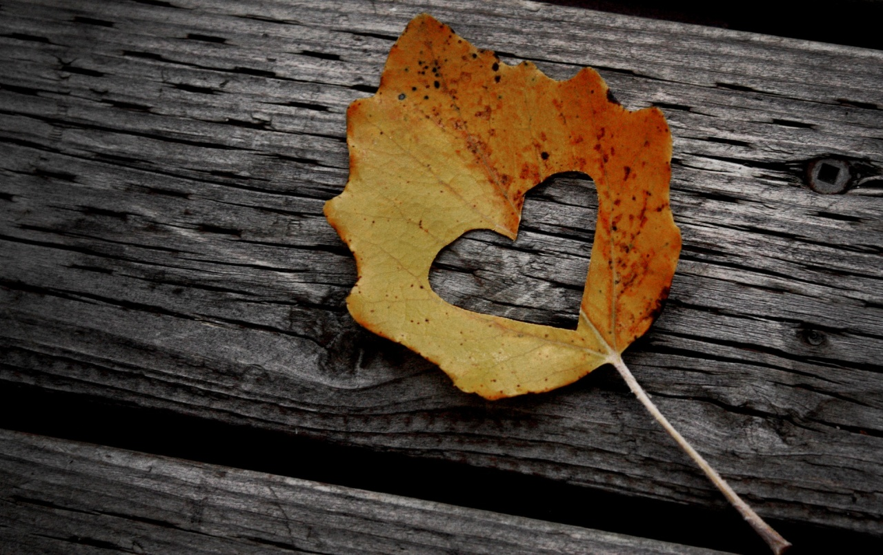 Love leaf wallpapers