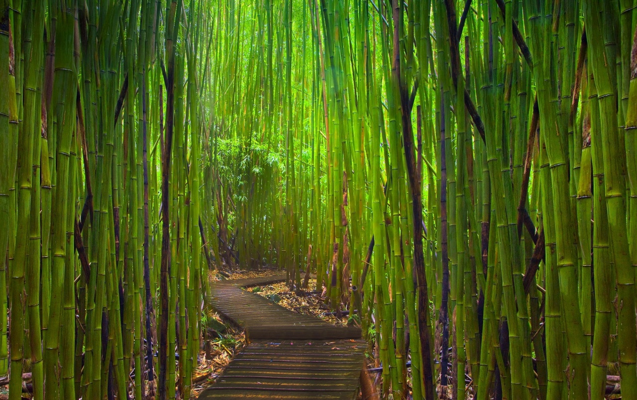 road in bamboo forest wallpapers | road in bamboo forest stock photos