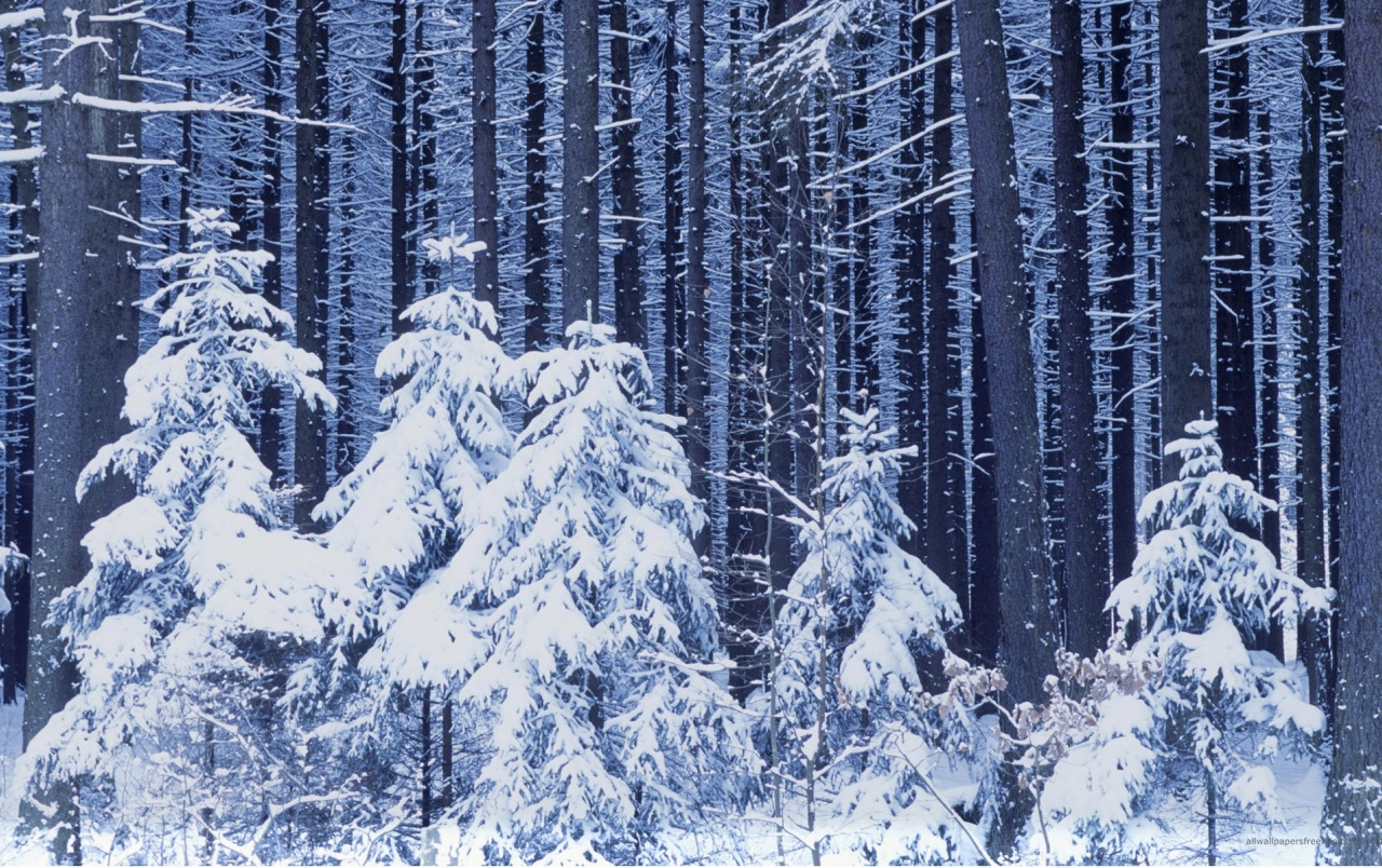 Snowy Trees wallpapers