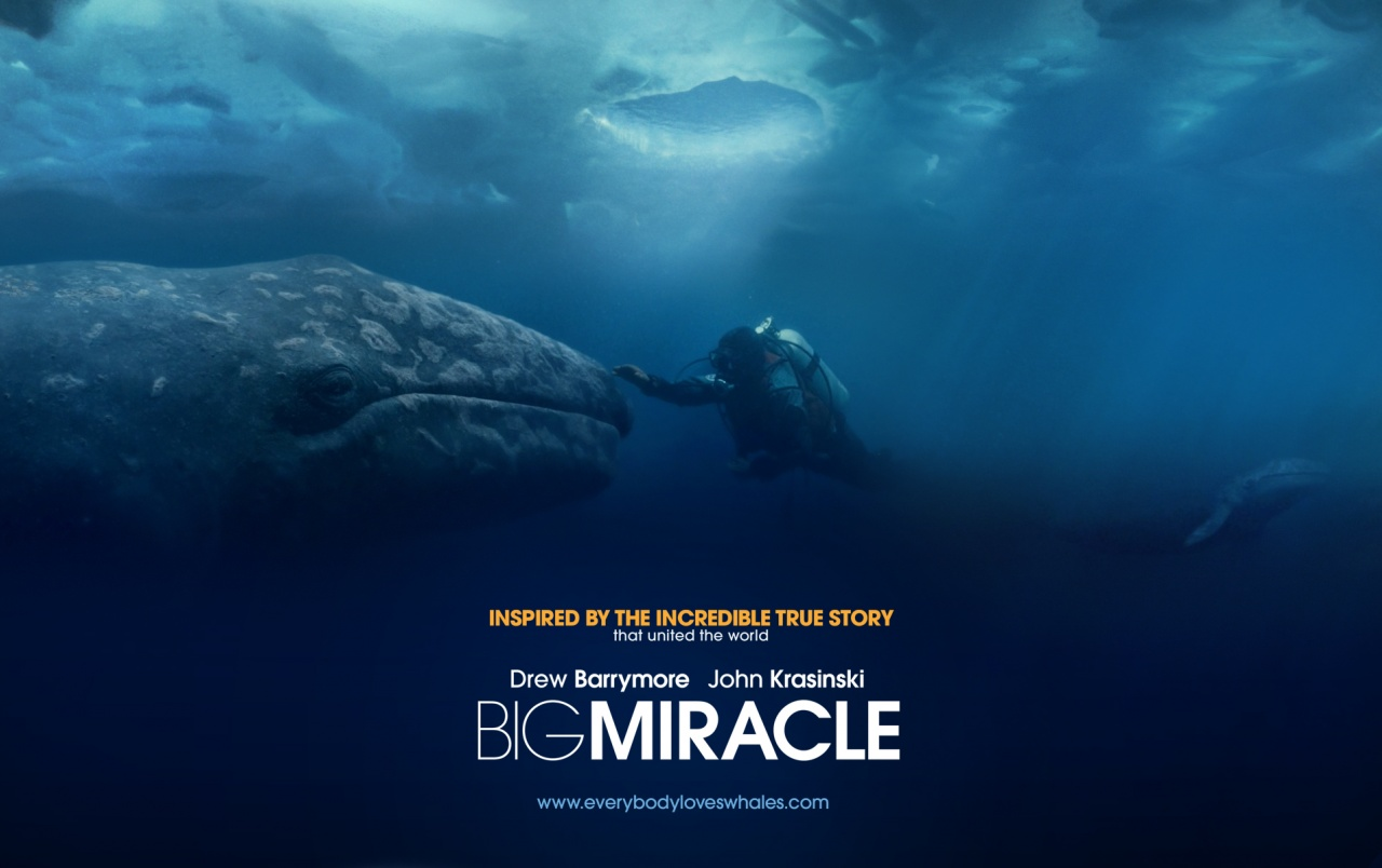 Big Miracle Wallpapers Big Miracle Stock Photos