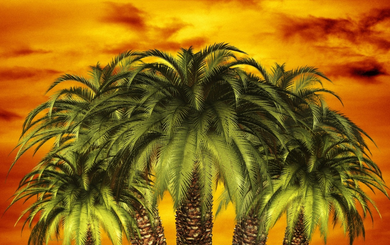 Palm Sunset wallpapers