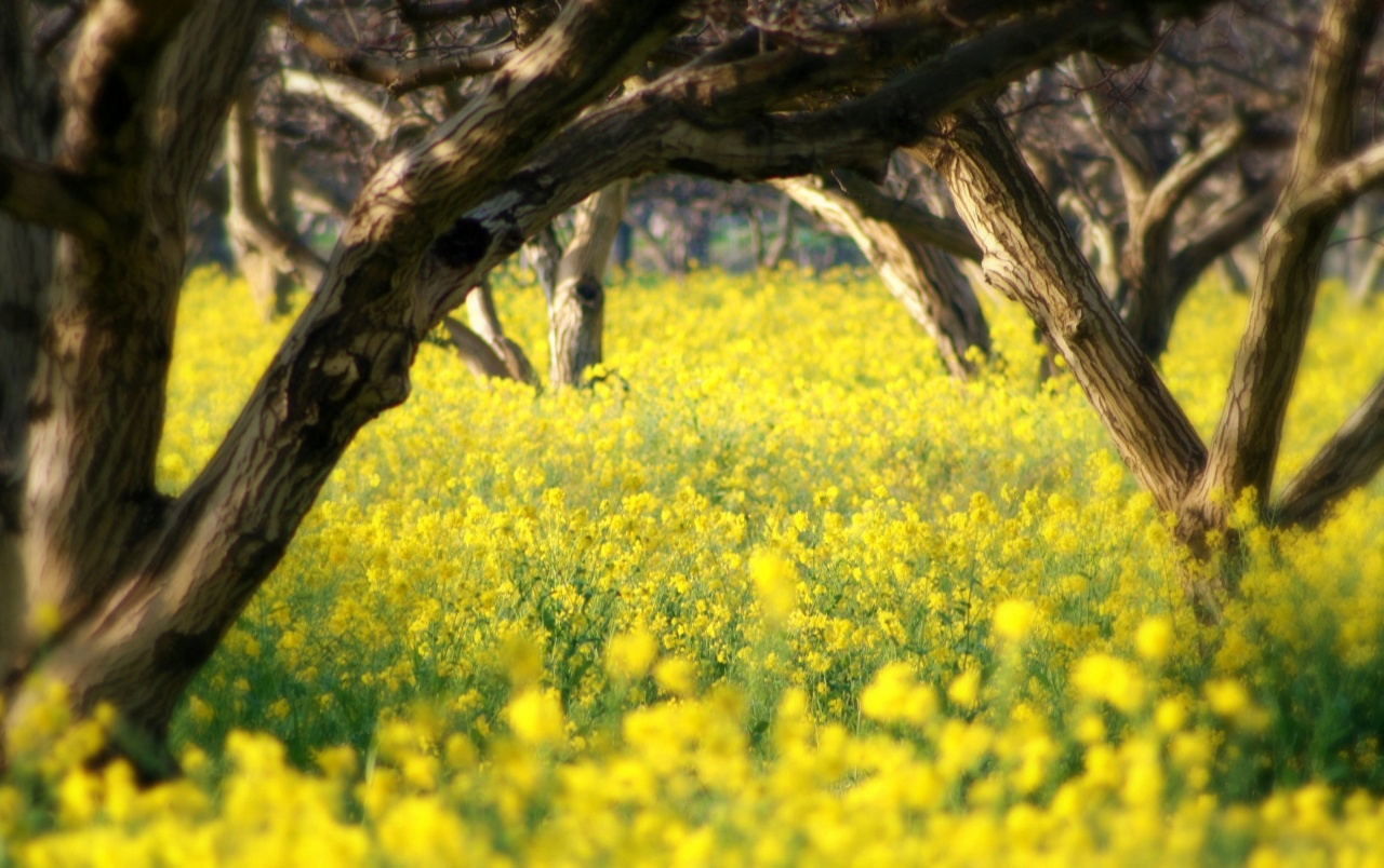Summer Yellow Flowers Wallpapers Summer Yellow Flowers Stock Photos
