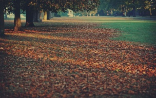 Autumn Leaves Rug wallpapers