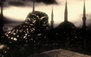 owl and istanbul wallpapers