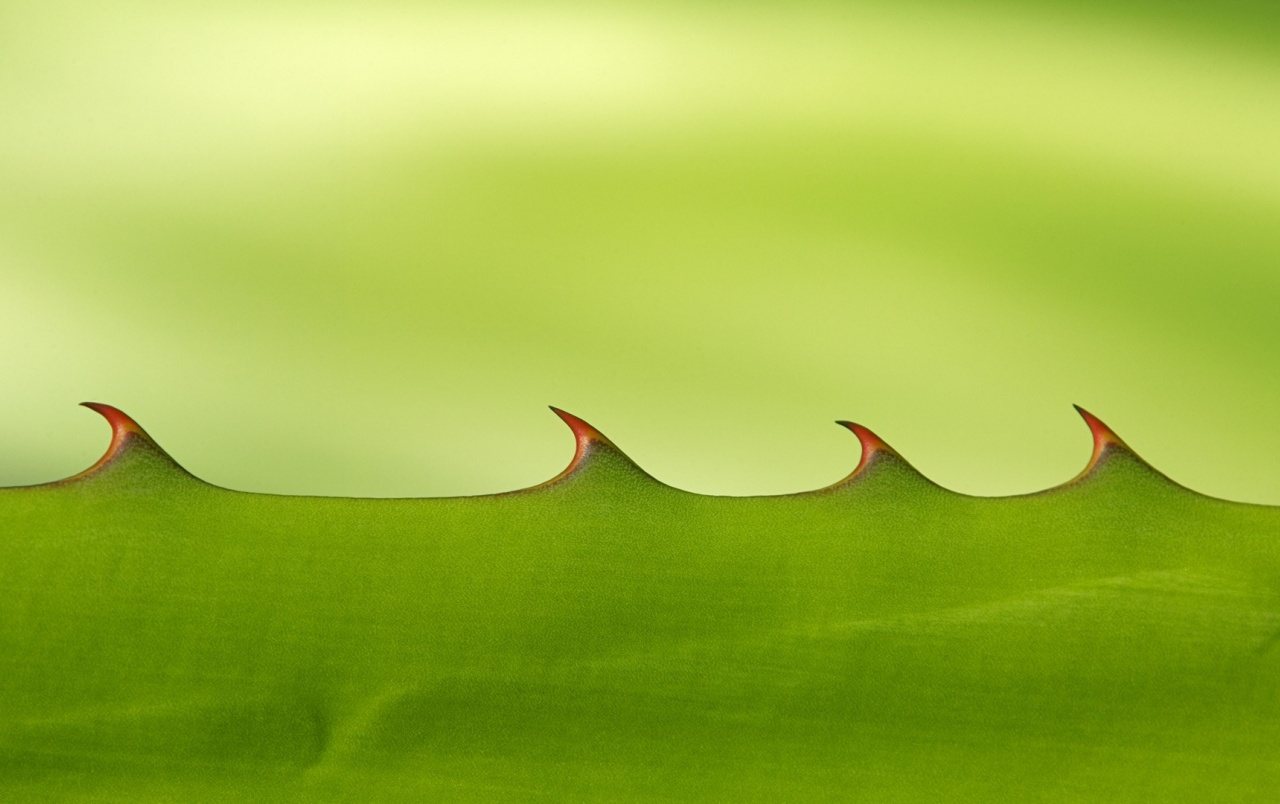 Leaf Macro wallpapers