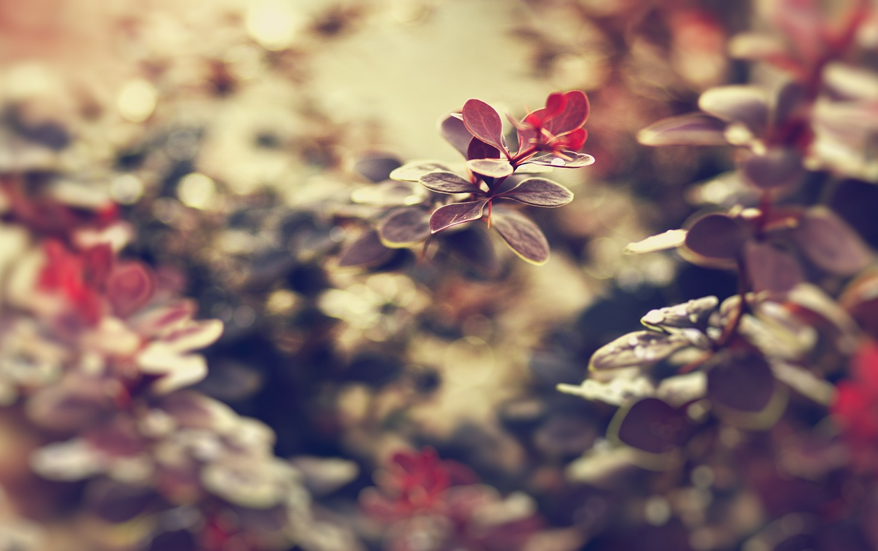 Small Red Leaves wallpapers