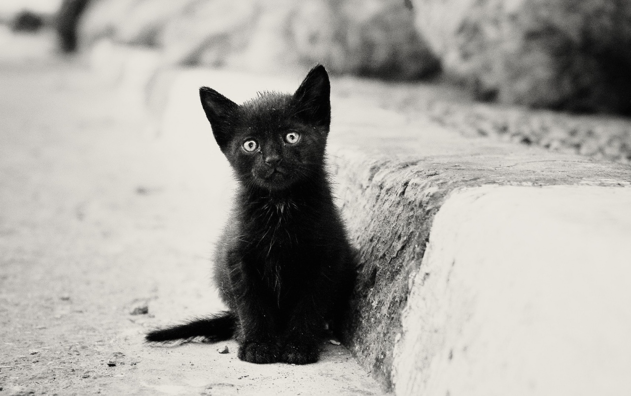 Lonely Black Kitten Wallpapers Lonely Black Kitten Stock Photos