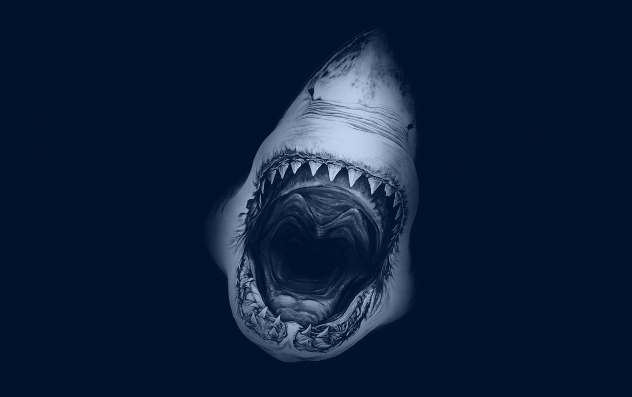 Great White Shark wallpapers