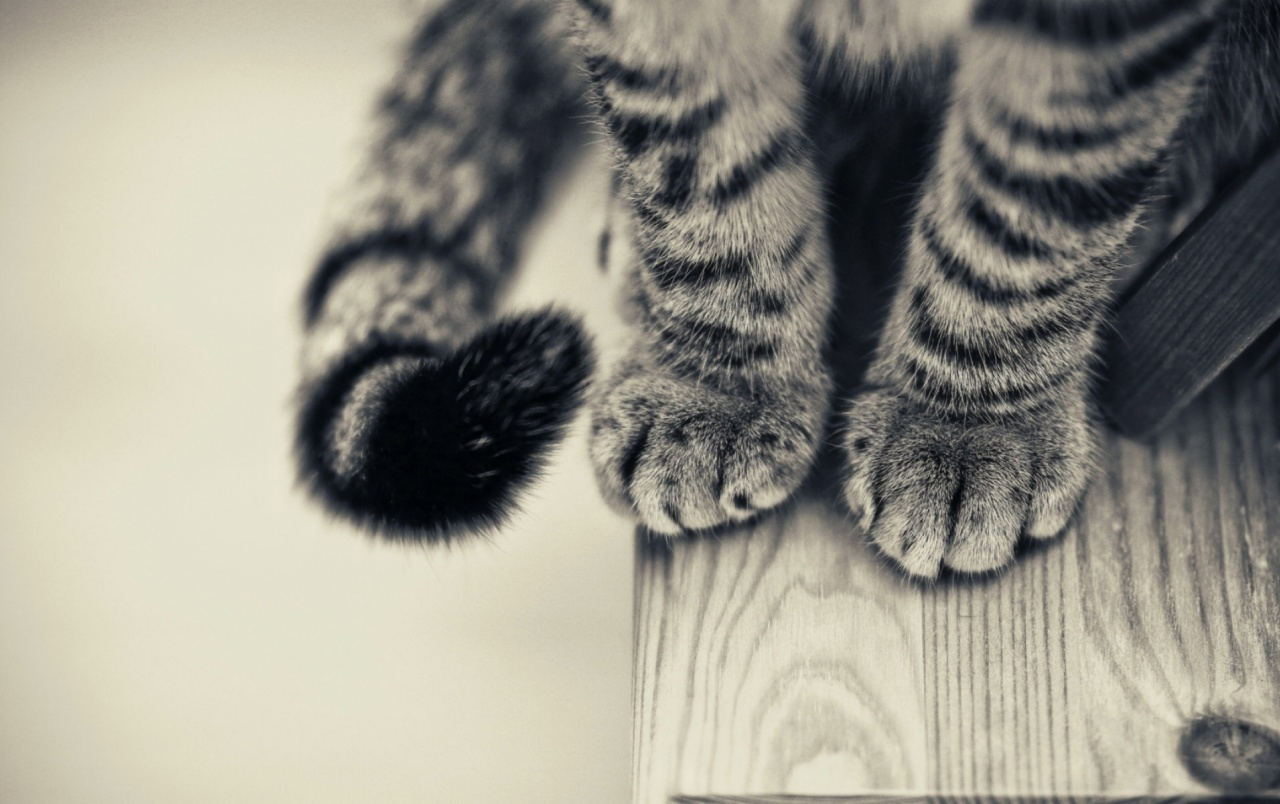 Cat Paws wallpapers