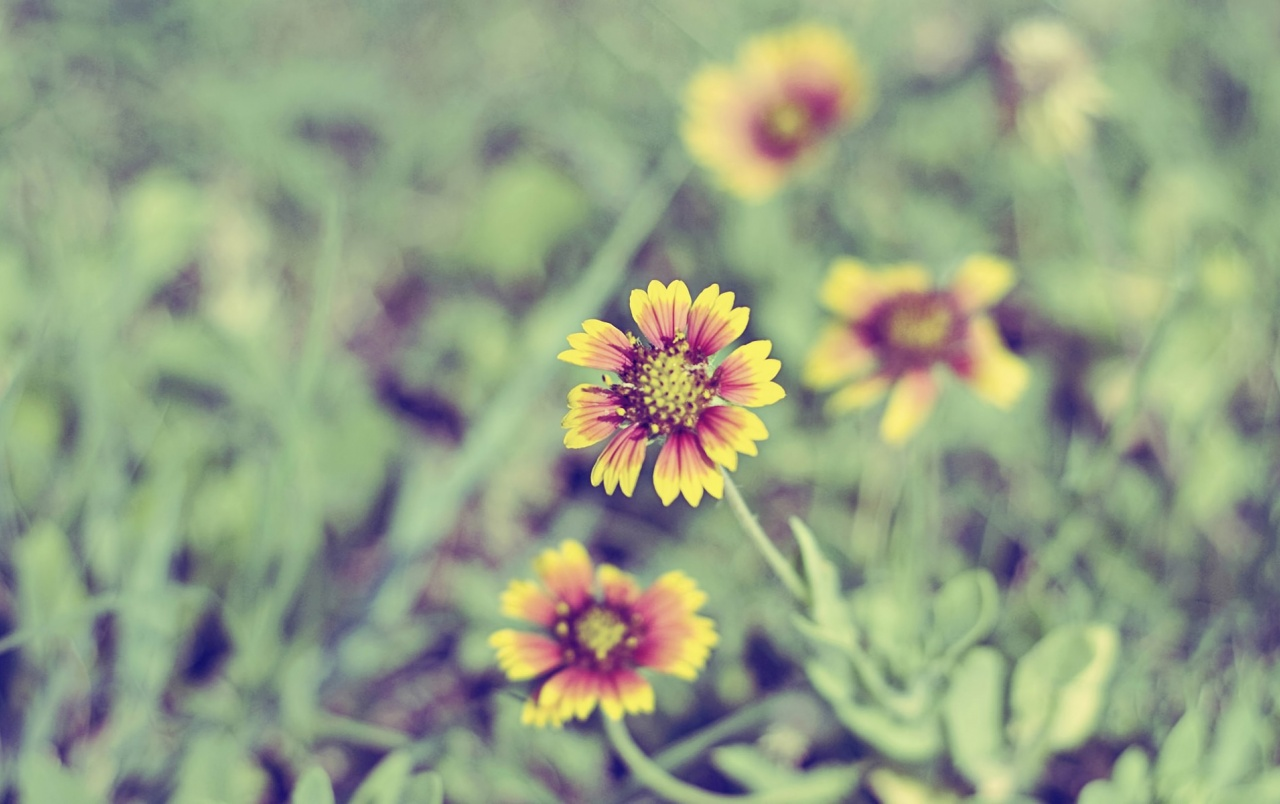Small Orange And Yellow Flowers Wallpapers Small Orange And Yellow