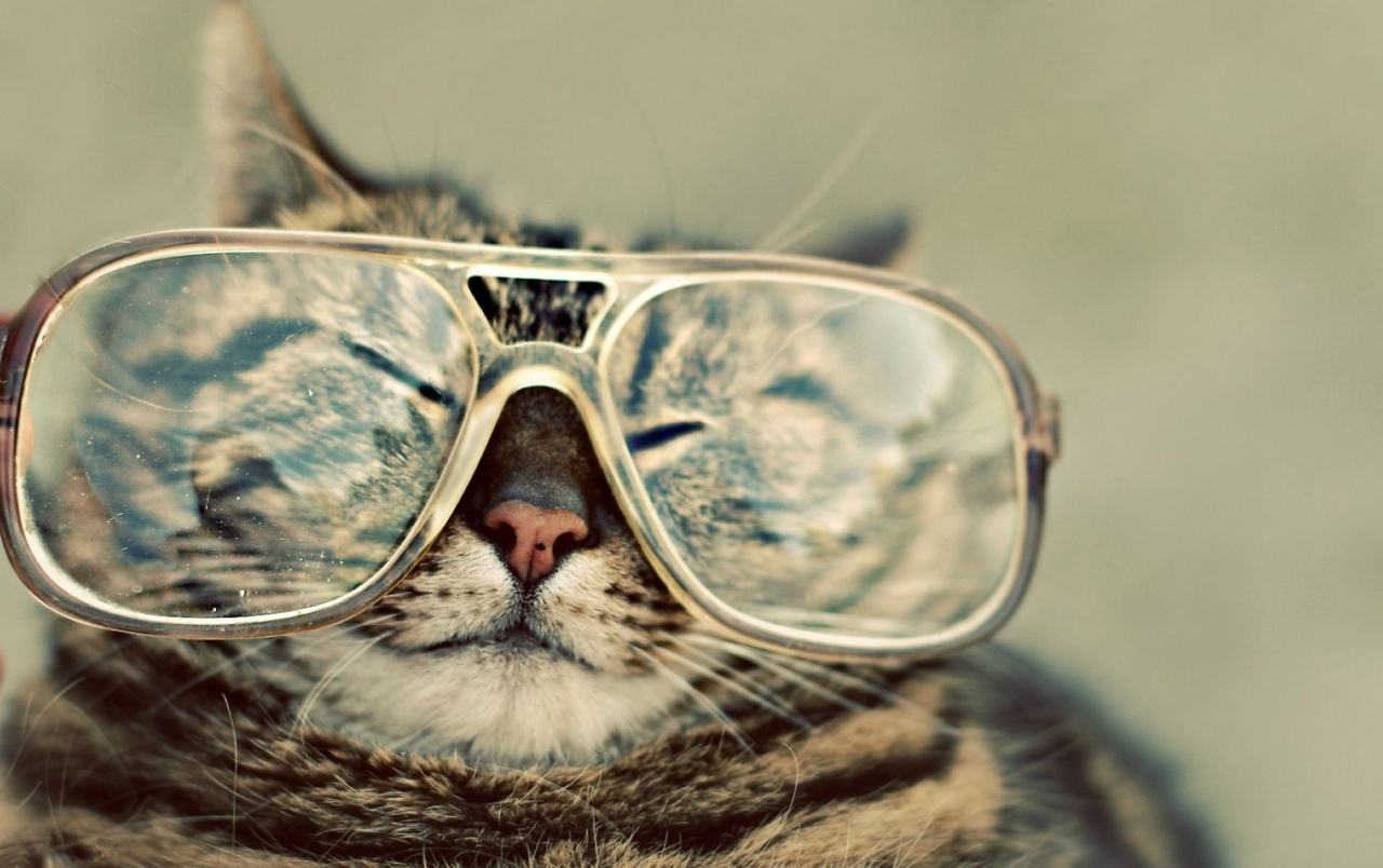 Wide Funny Cat With Glasses Wallpapers