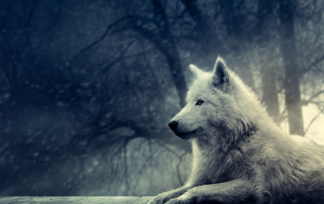 Nigth of the Wolf wallpapers