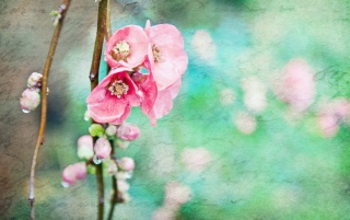 Artistic Spring Flowers wallpapers