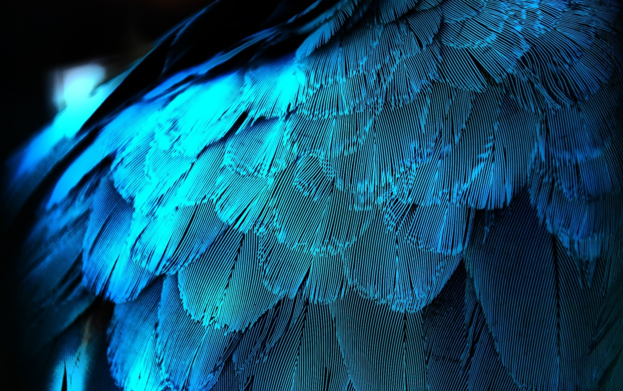 Electric Blue Feathers wallpapers