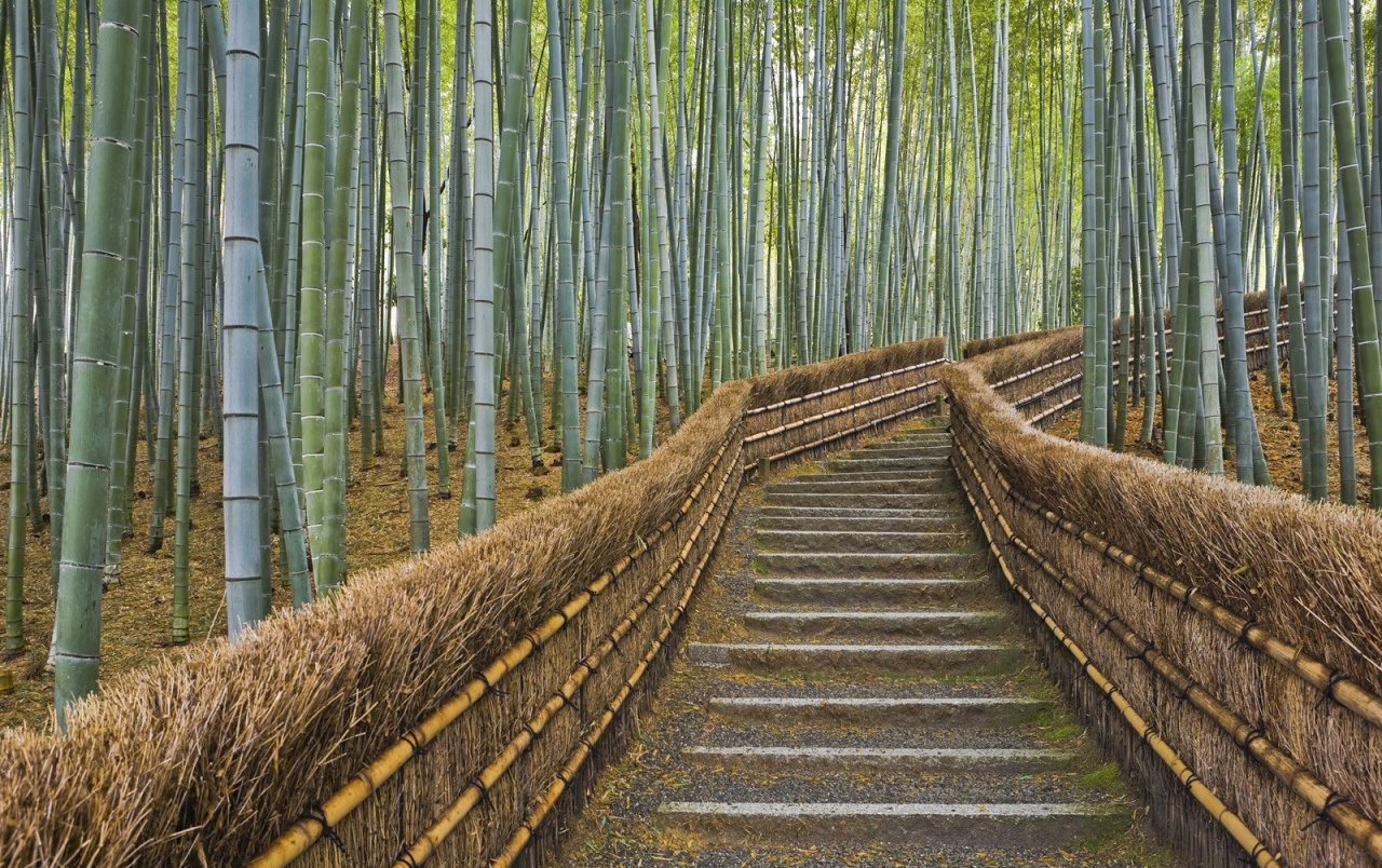 bamboo forest wallpapers | bamboo forest stock photos