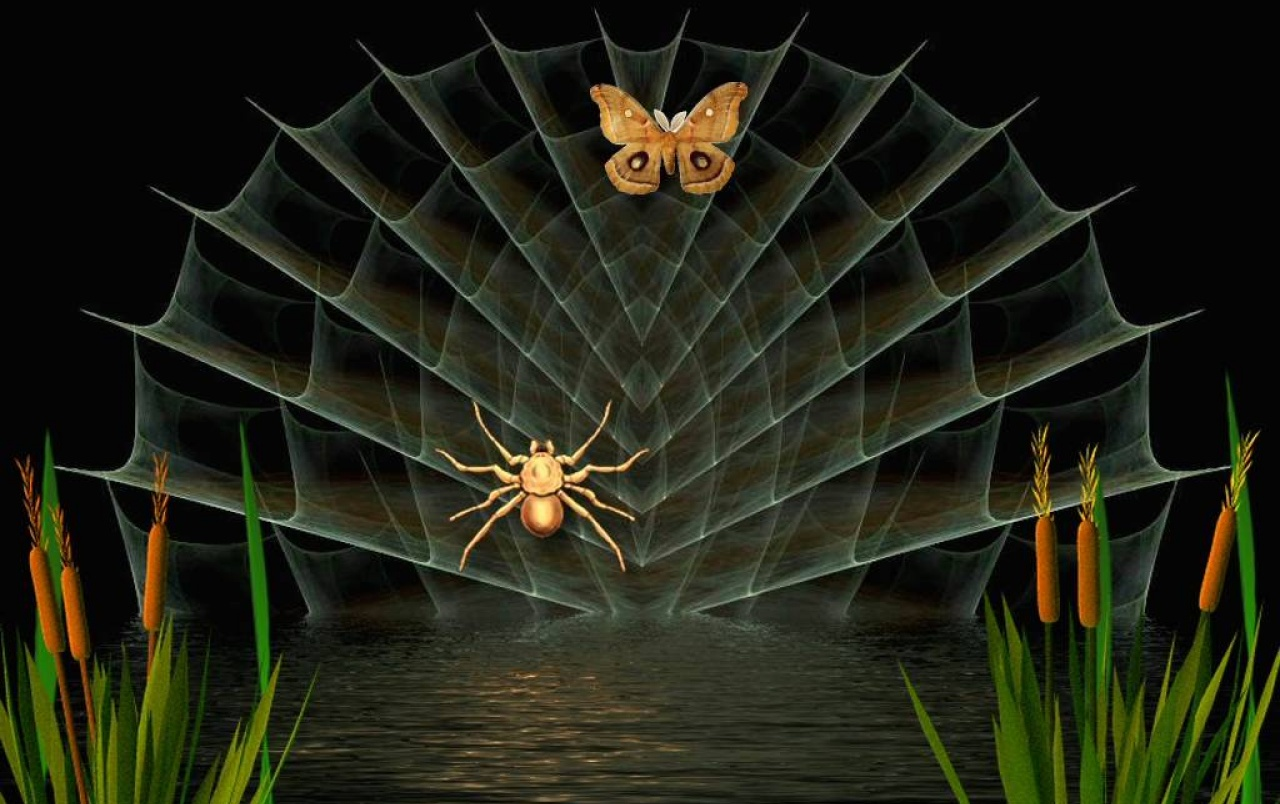 Spider & Butterfly wallpapers