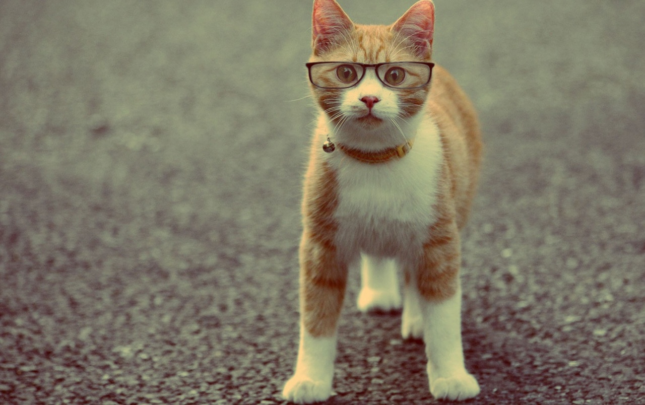 Wide Cat Wearing Glasses Wallpapers