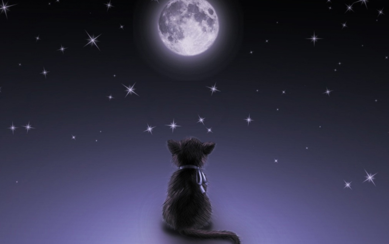 Moon Cat wallpapers