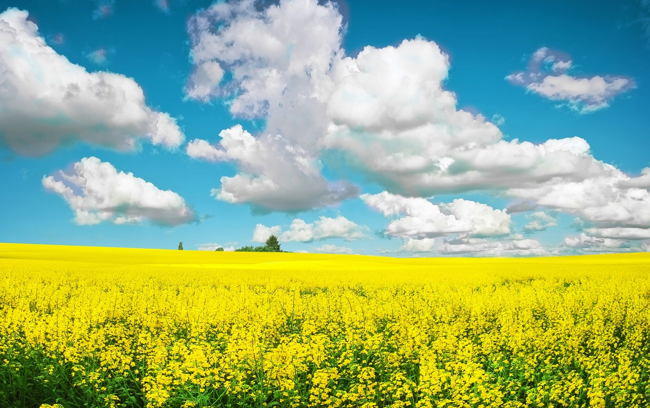 Yellow Field wallpapers