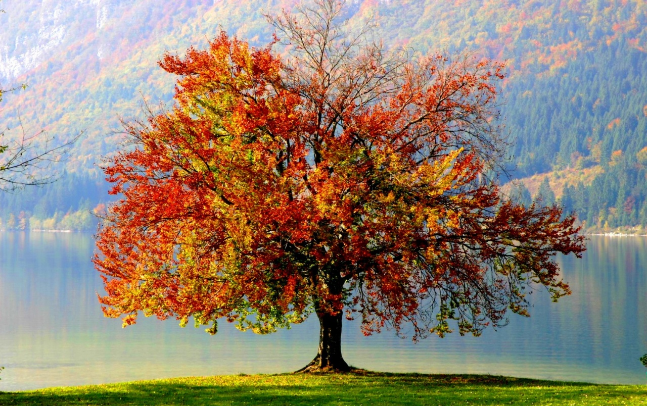 Autumn tree wallpapers autumn tree stock photos - Family tree desktop wallpaper ...