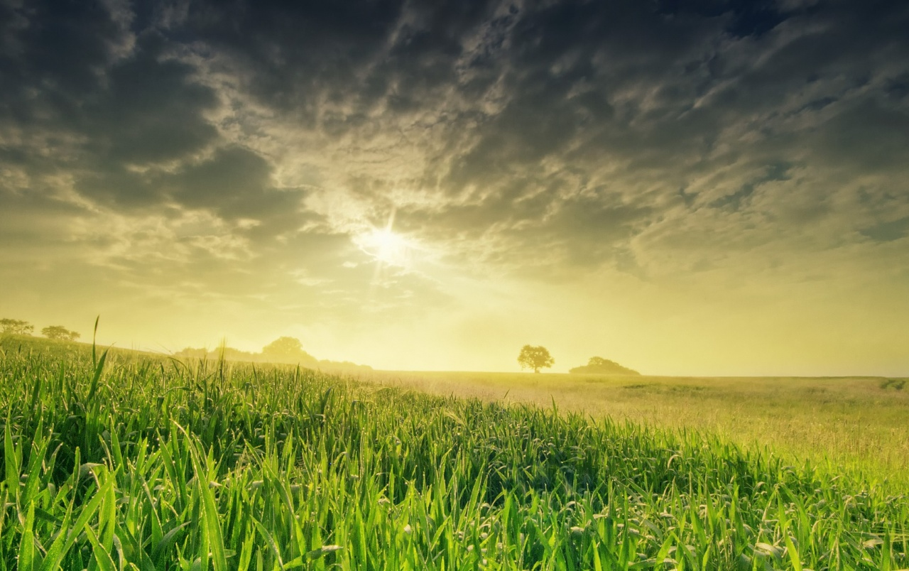 Sunrise Over Green Field Wallpapers