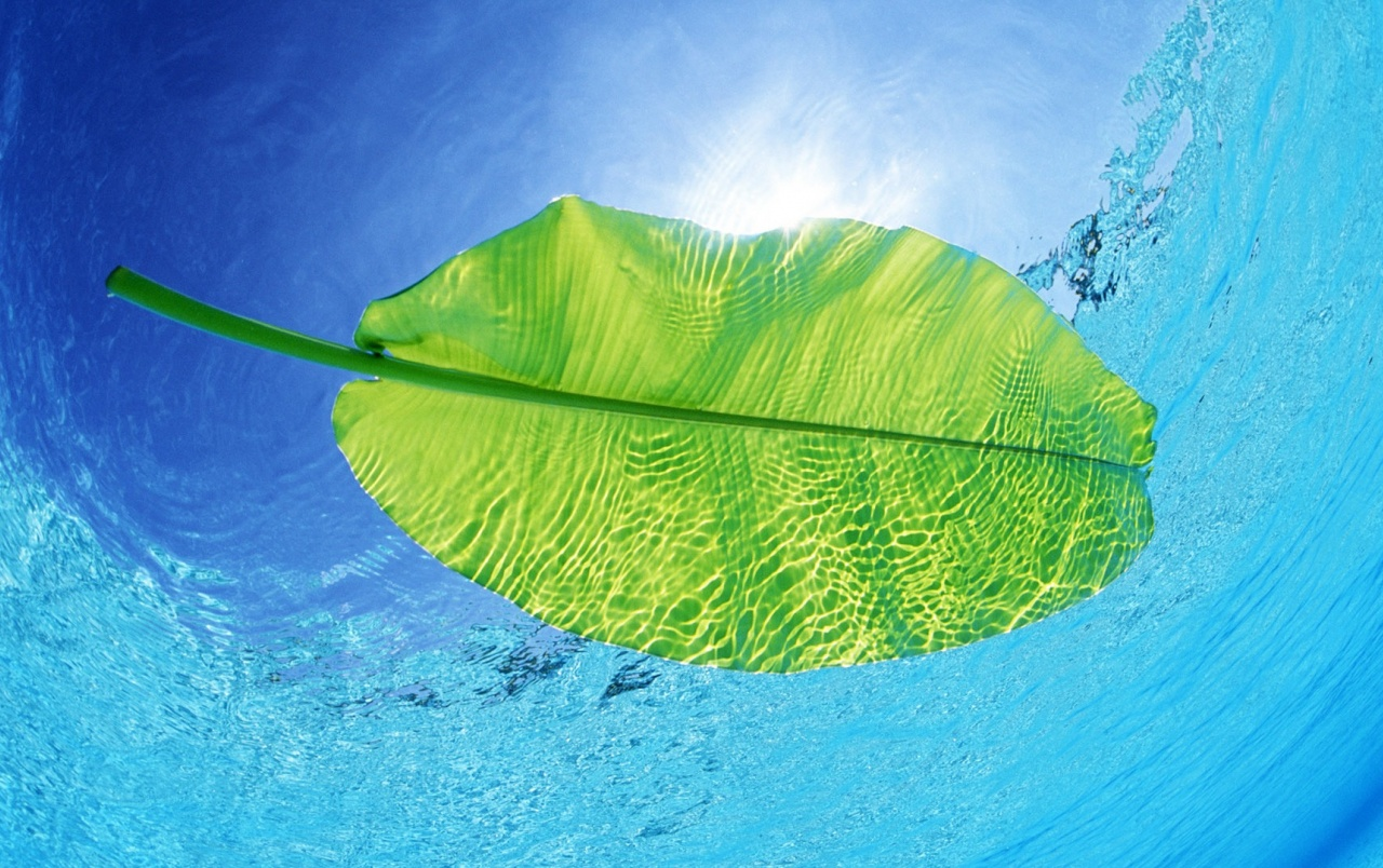 Swimming Leaf wallpapers