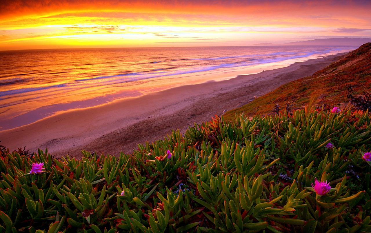 sunset plant flowers wallpapers