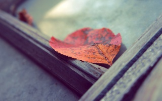 Fallen Red Leaves wallpapers