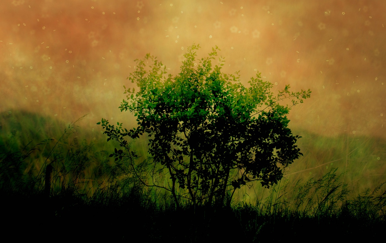 Photo Manipulation Plants wallpapers