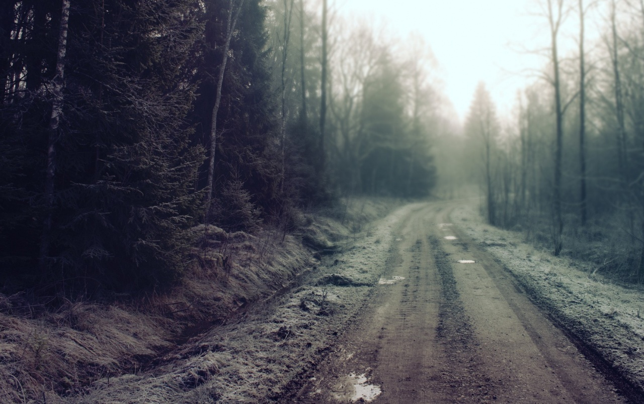 Frozen Forest Road wallpapers